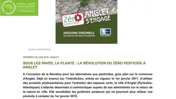 Sous les pavés, la plante : la révolution du zéro pesticide à Anglet